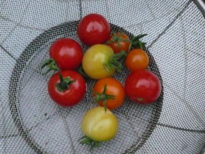 Tomato_008