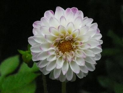 Dariya1
